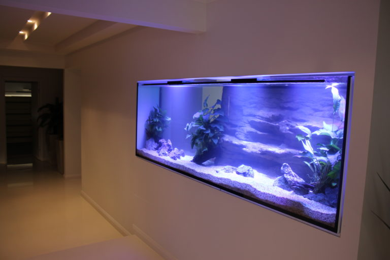 Custom Home In Wall Aquarium Aquarium Architect Custom