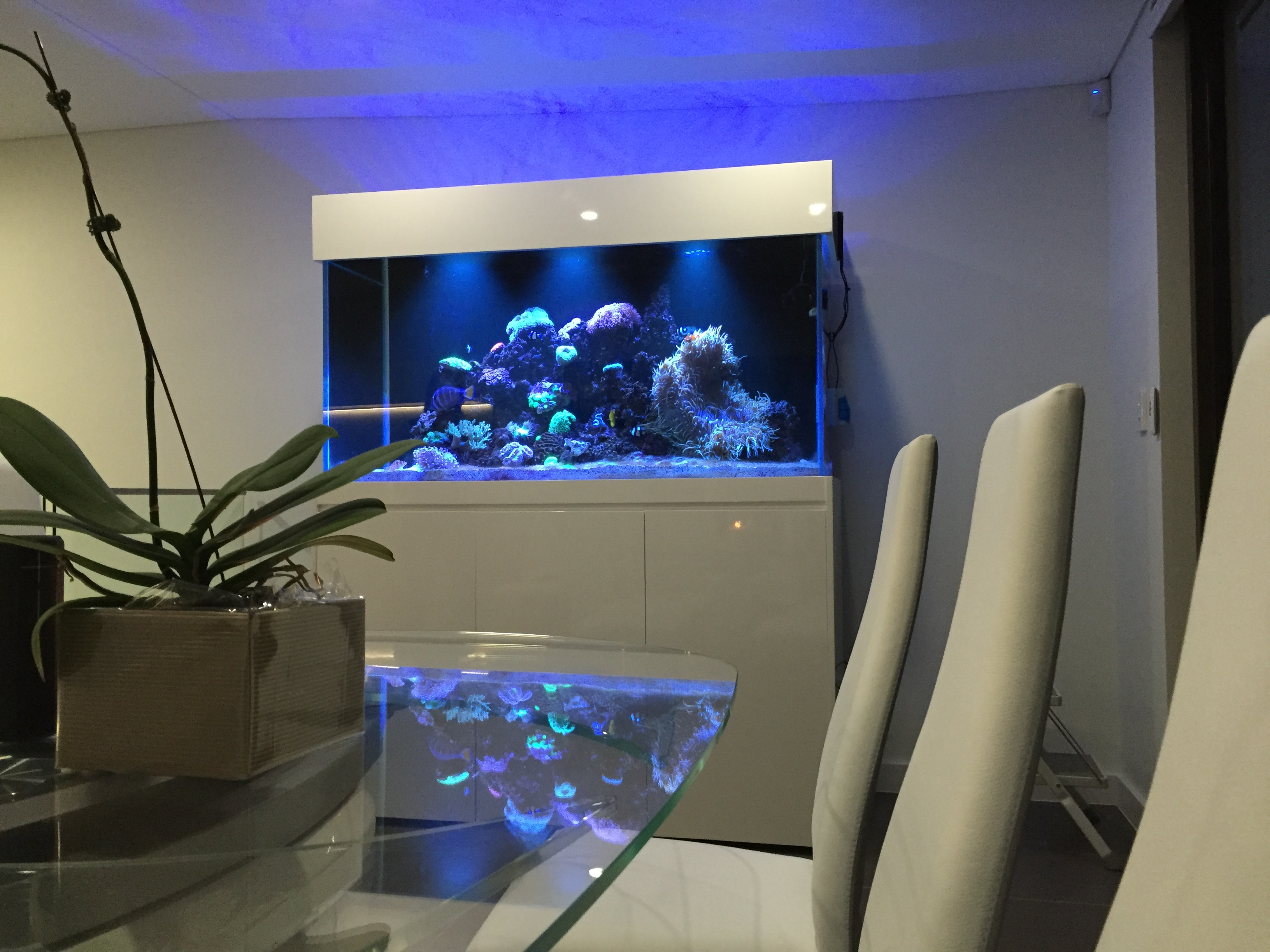 Custom Home In-Wall Aquarium