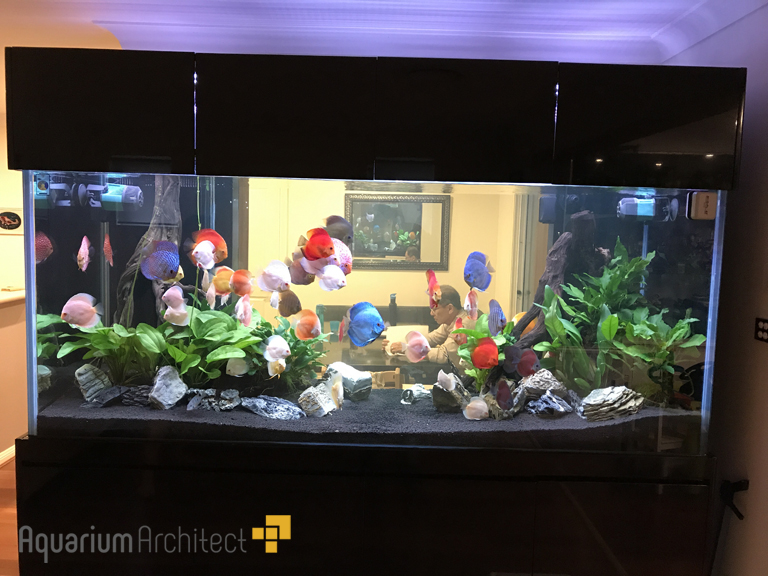 Lush Planted Discus Aquarium Aquarium Architect Custom